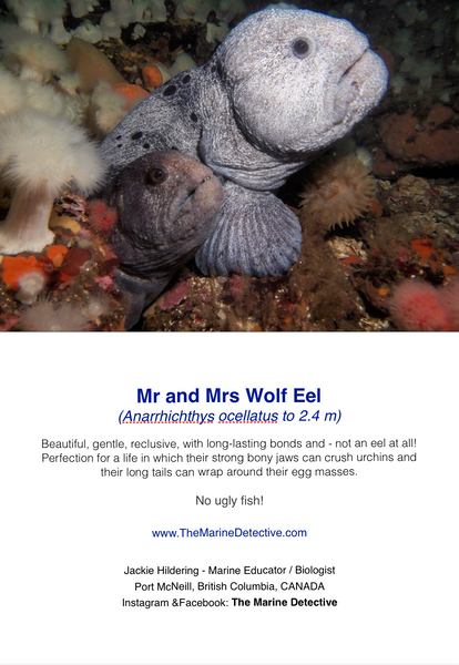 Mr and Mrs Wolf Eel