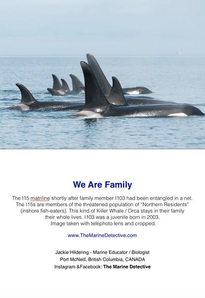 We Are Family - I15 matriline of Northern Resident Orca
