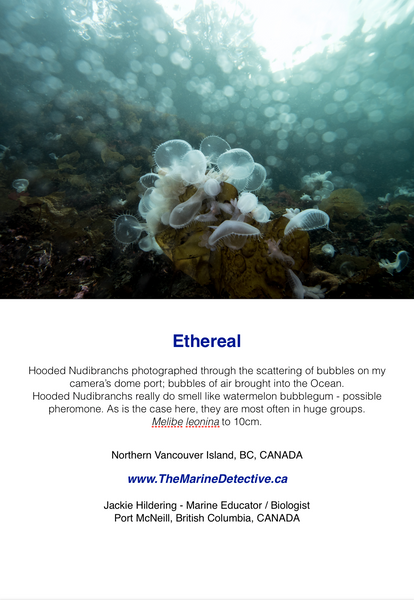 Ethereal - Hooded Nudibranchs