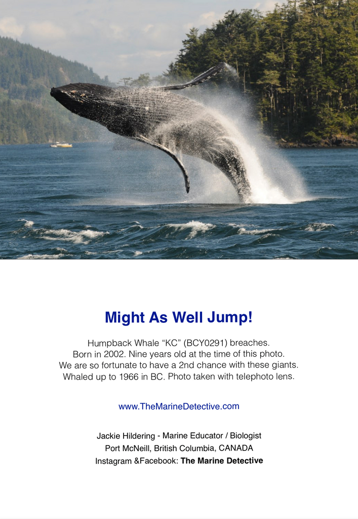 Humpback Whale KC - Might as Well Jump