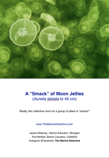 "A ""Smack"" of Moon Jellies"