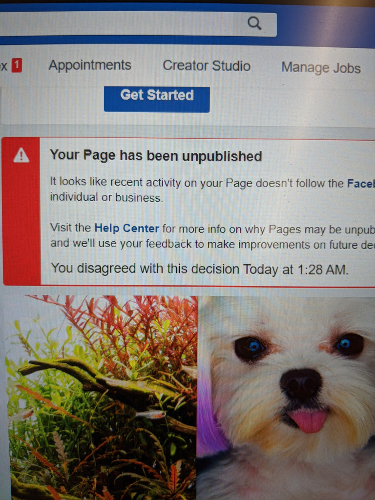 88 Pets Mart Facebook Page is unavailable right now.