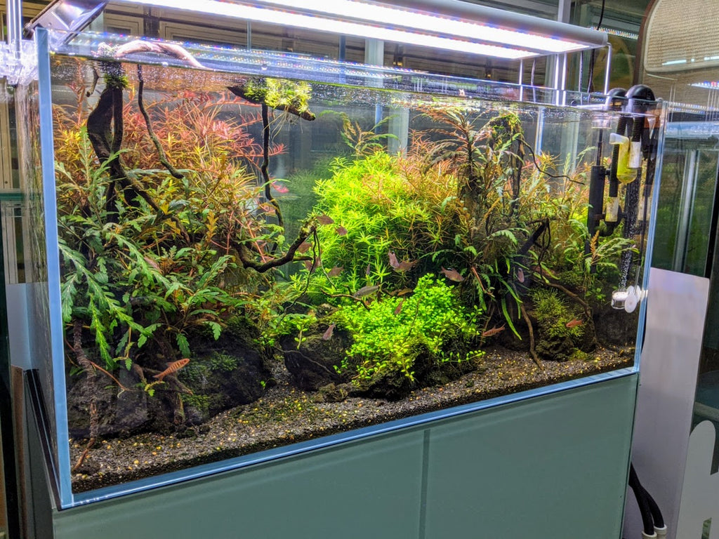 What does it takes to have a healthy aquascape tank?