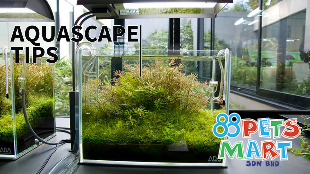 4 Important Tips for a Successful Aquascape - Part 1