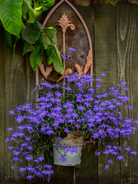 rustic wall pot with flowers