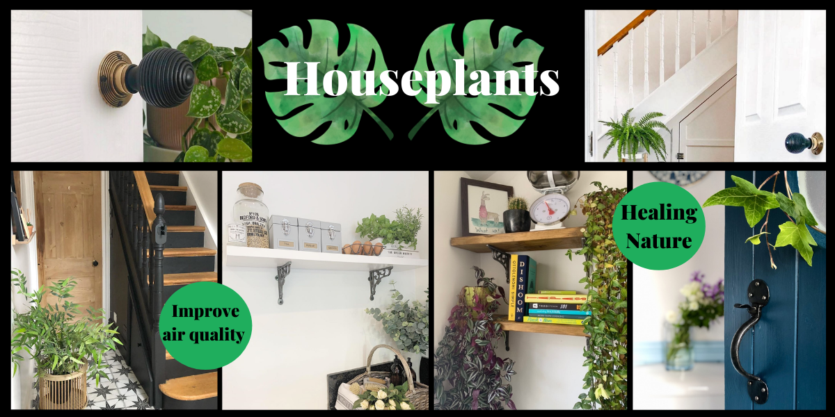 Houseplant Interior trend 2021