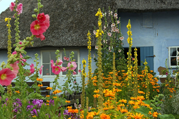 Thatched Cottage Colourful Flowers