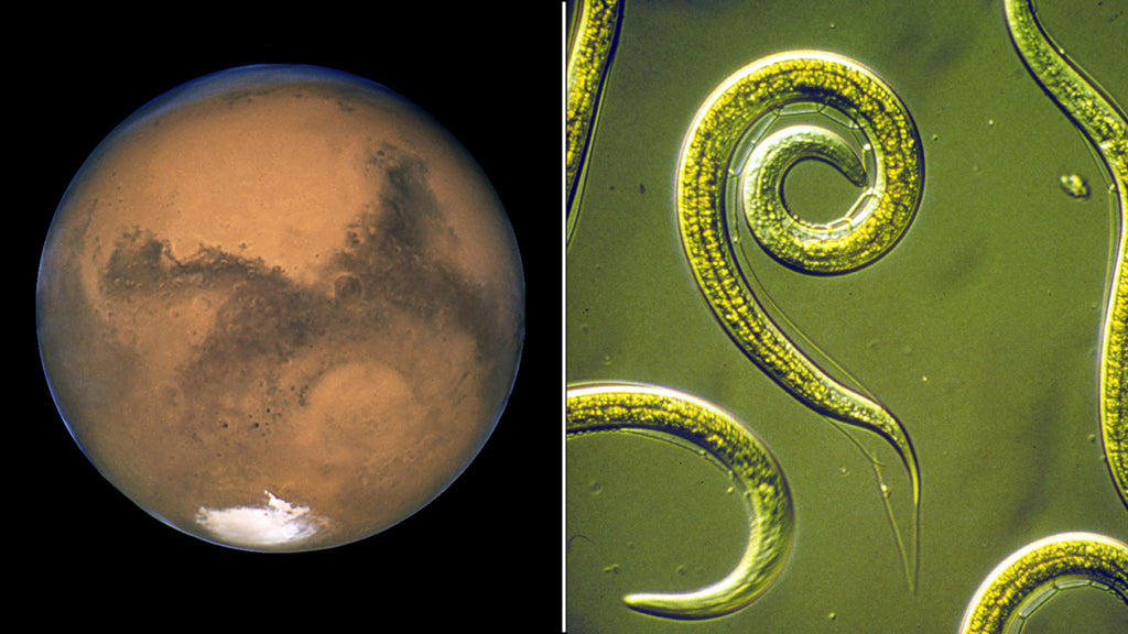 Lake on Mars and Ancient Worms