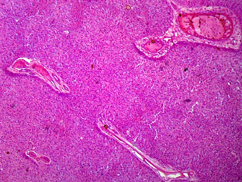 Liver, Mammalian; Showing Hepatic Cells; Section; H&E Stain