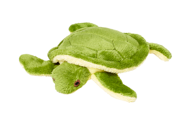 Shelly Turtle