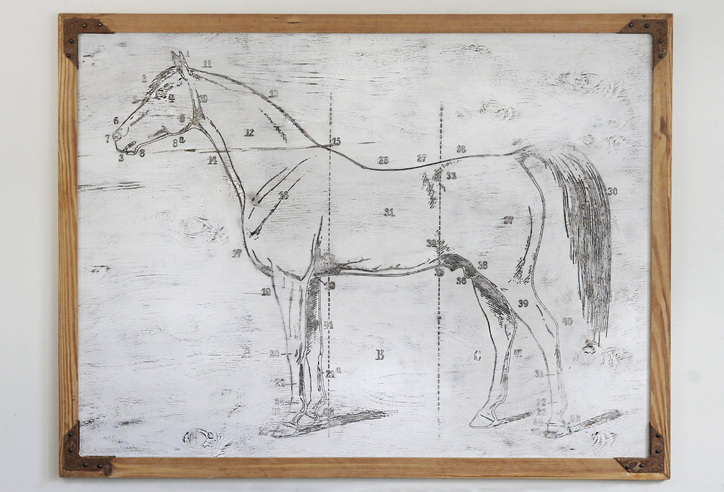Horse Study Framed Wall Art - Haven America