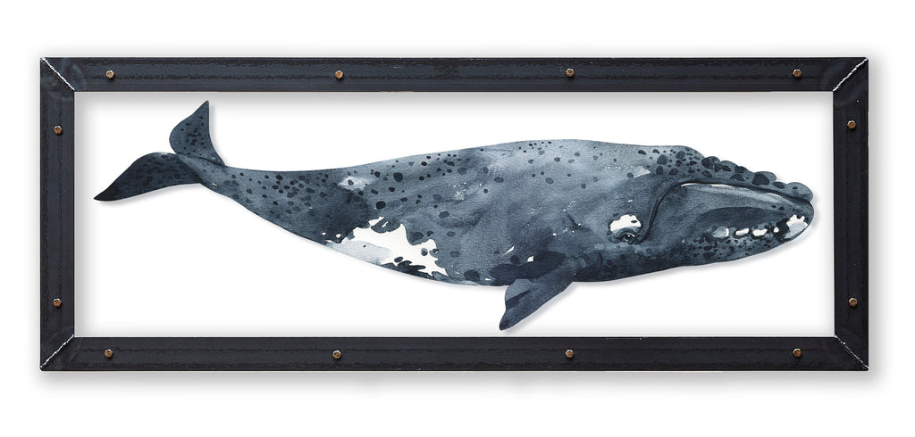 Northern Right Whale Print with Metal Frame - Haven America