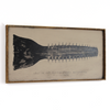Head of Sawfish Art Print Framed - Haven America