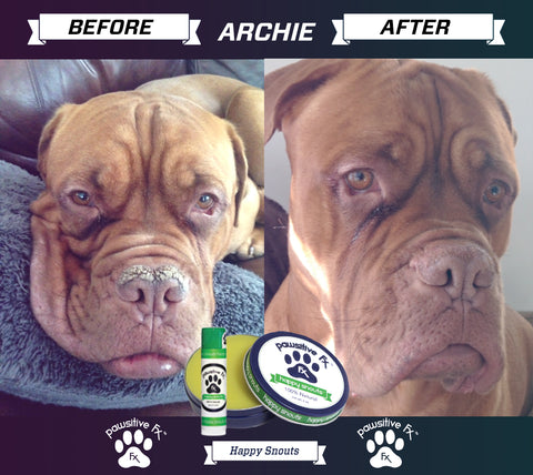 dog nose balm before after