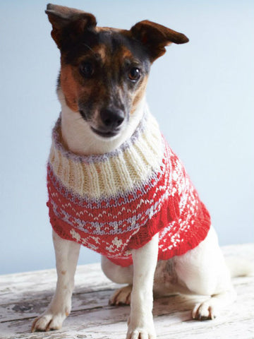 Dog jumper knitting patterns your pet will love – The Knitting Network