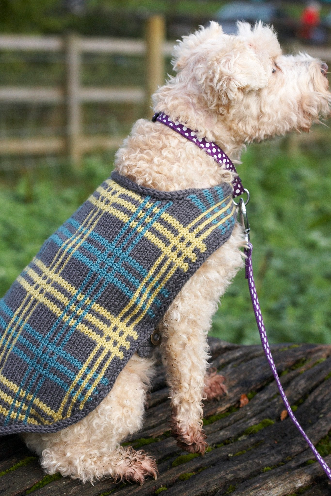 Dog Coat Knitting Pattern Uk : Vintage dog coat with plaid design knitting pattern the
