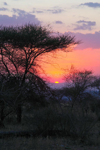 Serengeti Sun Down