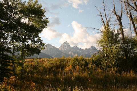 Grand Tetons View from the Forest