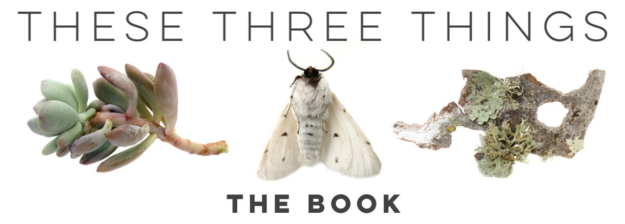 These Three Things Lisa Anderson Shaffer