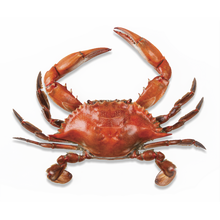 Domestic Blue Crab - Boilerplate Crab & Co