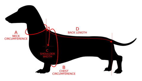 Dachshund Measuring Guide