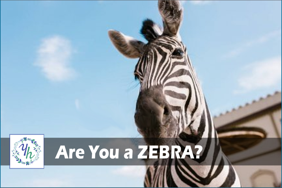 Are you a Zebra?