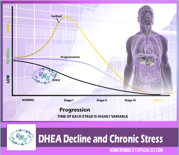 The Stages of DHEA Decrease During Stress