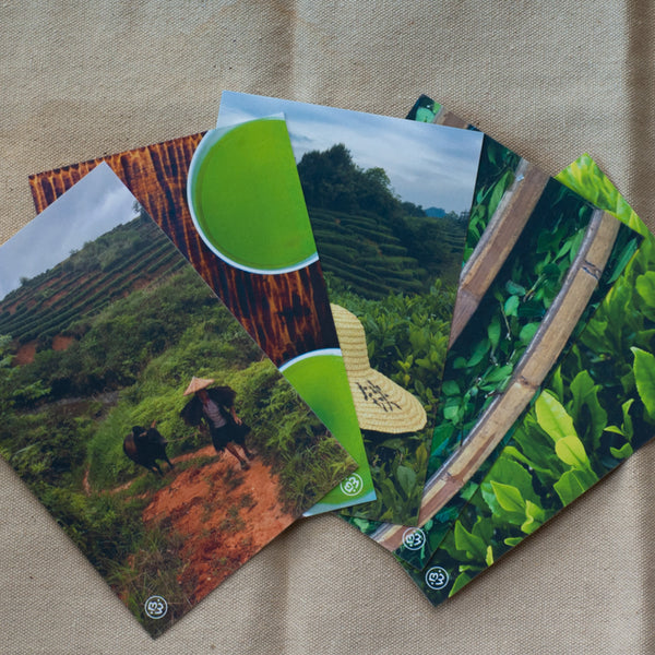 Tea Travels 5 Postcard Set