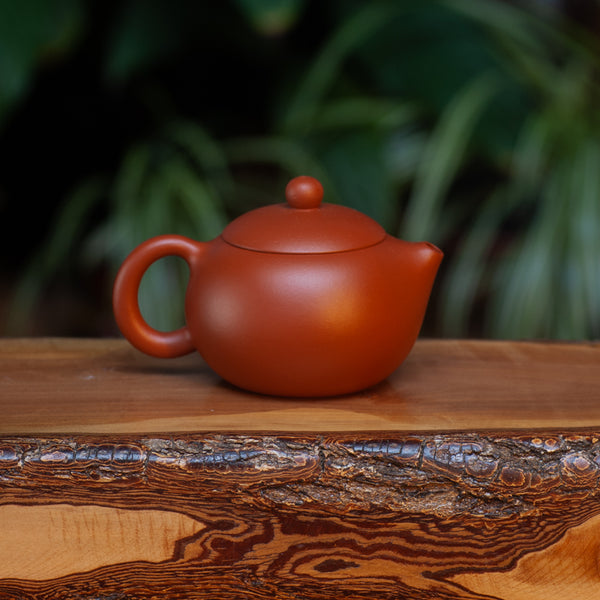 Red Xishi Yixing pot