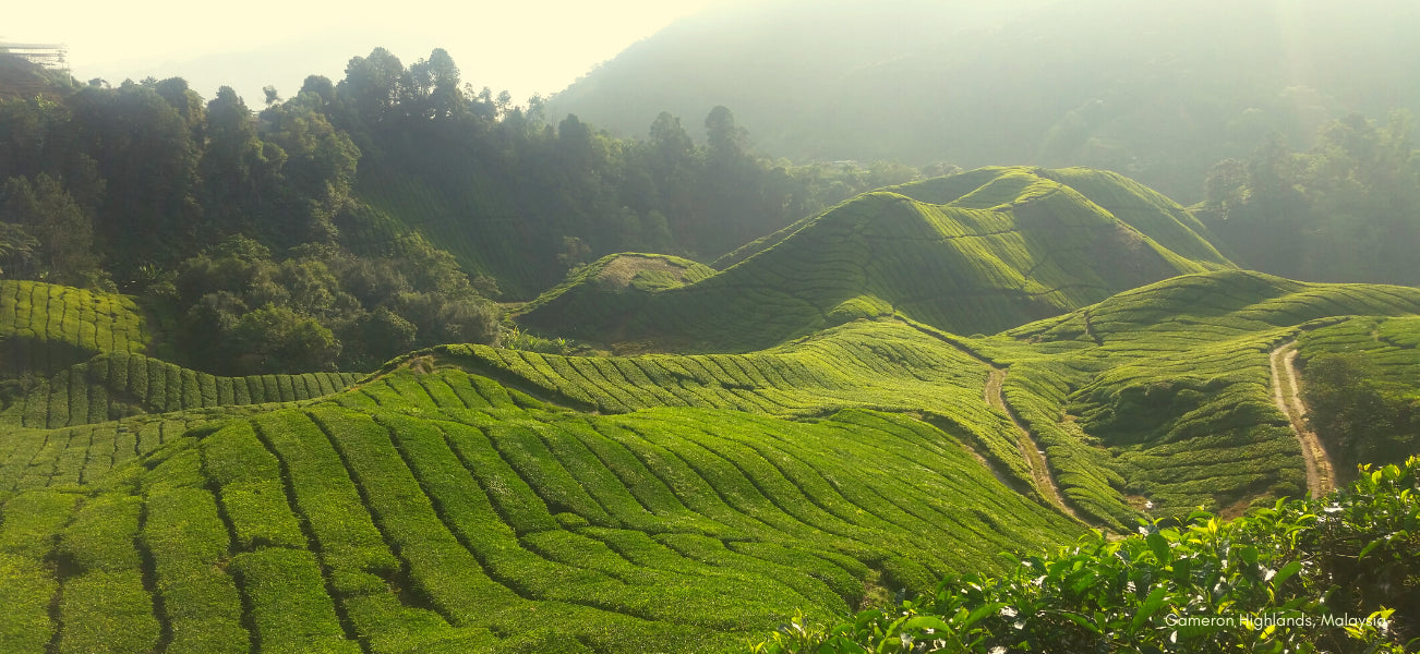 Blue Willow Tea 5