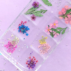 Small Dried Flower and Leaf | Floral Resin Inclusions | Wild Carrot Flower for Nail Art | Queen Anne's Lace Embellishments (1 Box of 12 Colors)