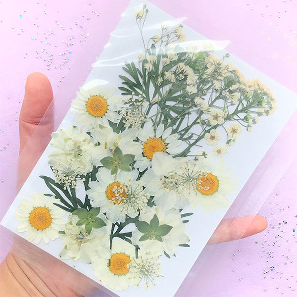 Pressed Real Flower in White Color | Dried Natural Flower Assortment | Consolida Daisy Flower Baby's Breath | Herbarium Sheet | Floral Resin Jewelry DIY