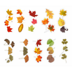 Autumn Leaves Stickers | Realistic Pressed Leaf Sticker for Scrapbooking | Embellishments for Herbarium | Resin Art (20 pcs)