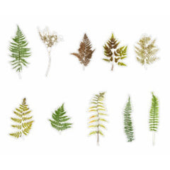 Pressed Eagle Fern Leaves Stickers | Realistic Leaf Embellishments for Herbarium | Resin Inclusions | Scrapbook Supplies (20 pcs)