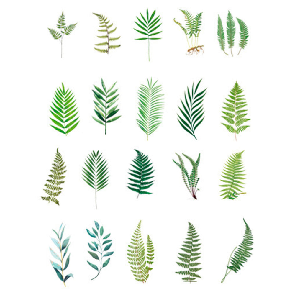 Pinnatisect Leaves Stickers | Realistic Pressed Leaf Embellishments for Resin Crafts | Herbarium Sticker | Scrapbooking Supplies (40 pcs)