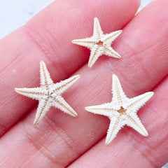 Tiny Starfish Embellishments | Natural Shells | Seashells for Beach Decor | Fairy Garden Decoration | Resin Crafts (3pcs / 1cm to 1.5cm)