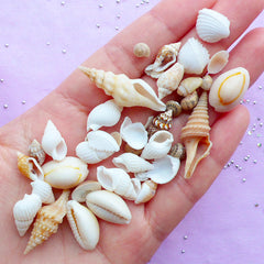 Natural Seashell Embellishments | Mini Sea Shells for Nautical Decoration | Filling Materials for Resin Crafts (40-80pcs / 4mm to 25mm)