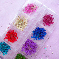 Assorted Dried Flowers | Tiny Queen Anne Lace | Resin Craft & Glass Bottle Jewelry Supplies (1 Box of 12 Designs)
