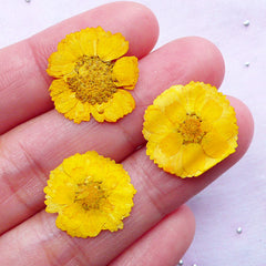 Yellow Pressed Flower | Little Dried Flowers | Resin Craft Supplies (3pcs)