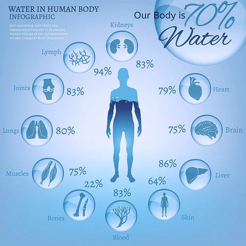Where Does Water Go After Drinking It The Explanation Of Water Absorp