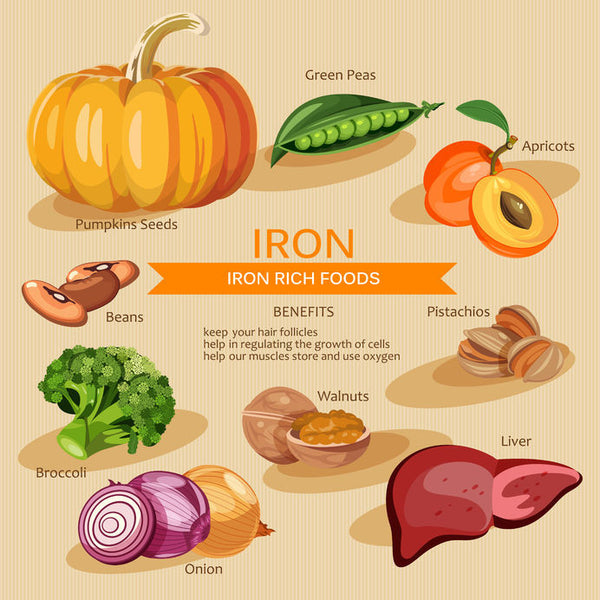 importance of iron in the body