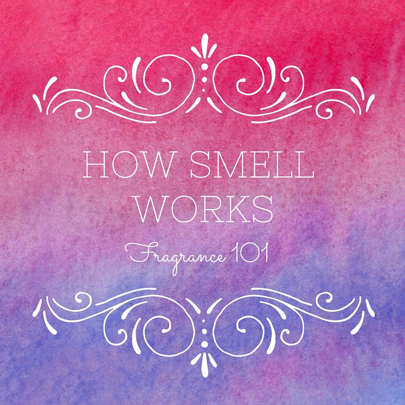 How Smell Works