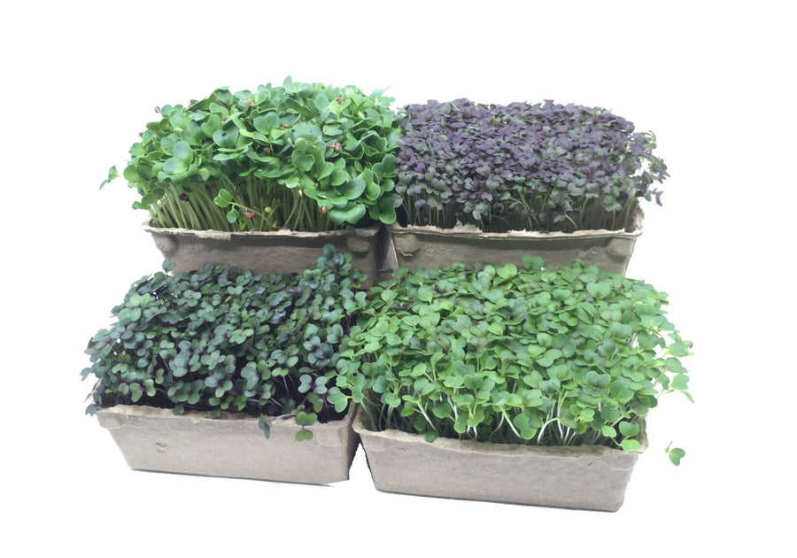 Grow Your Own Micro Herb Kit!