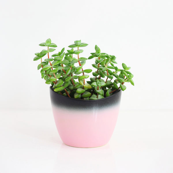 Mid Century Pink and Black Ombre Planter