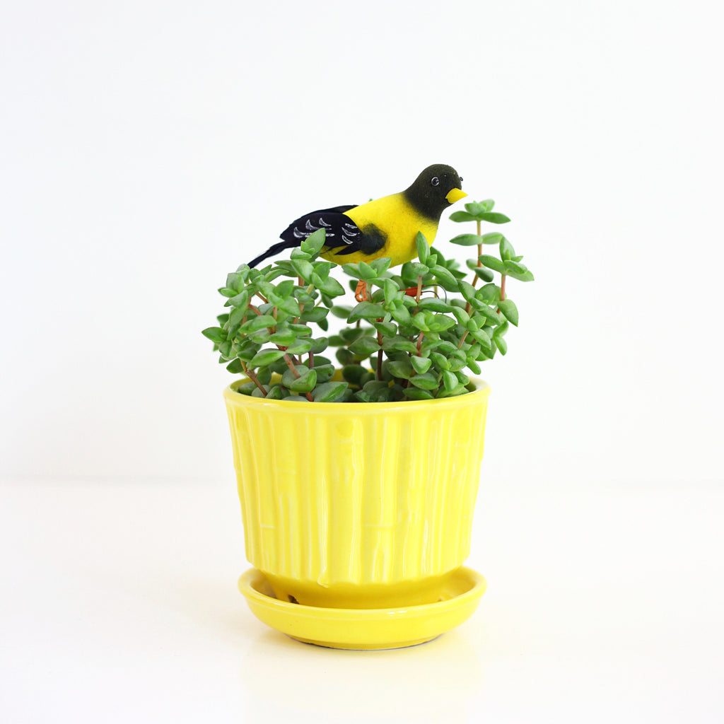 SOLD - Mid Century McCoy Yellow Bamboo Planter