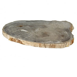 Montes Doggett Giant Fossil Wood Block - GDH | The decorators department Store