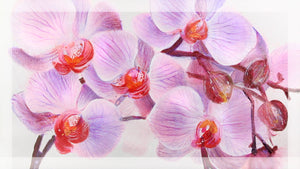 Painting Orchid Flowers