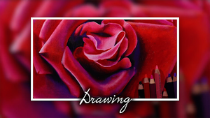 Drawing a Red Rose