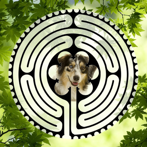 Australian Shepherd - Doggy Labyrinth-maze