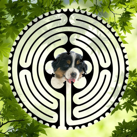 Australian Shepherd Puppy - Doggy Labyrinth-maze